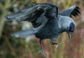 Jackdaws and Owls : Finding you own Purpose